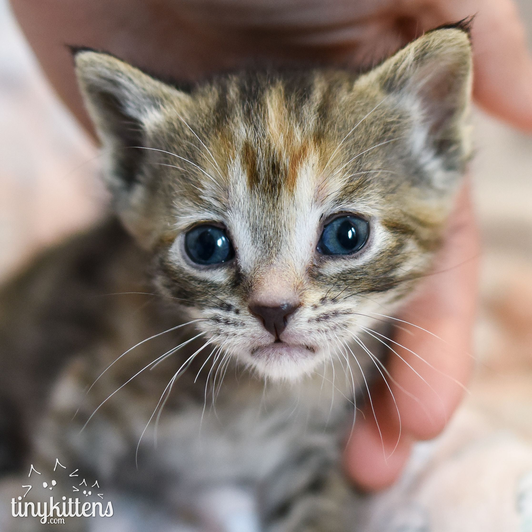 Tinykittens Society Rescue Kitten Tv Feral Cats Pregnant Cat Kitten Rescue