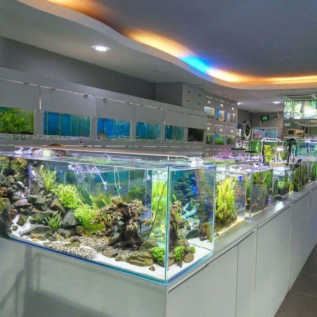 Beautiful Aquascape With Quality Healthy Plants Aquarium Store Aquarium Freshwater Aquarium Plants