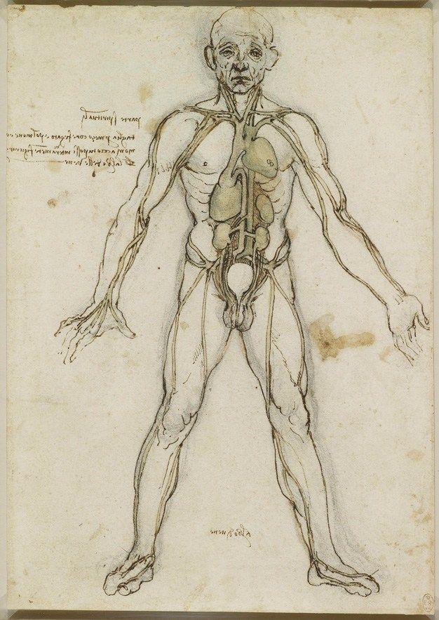 Charmant Leonardo Da Vinci Skizzen Anatomie Fotos - Menschliche ...