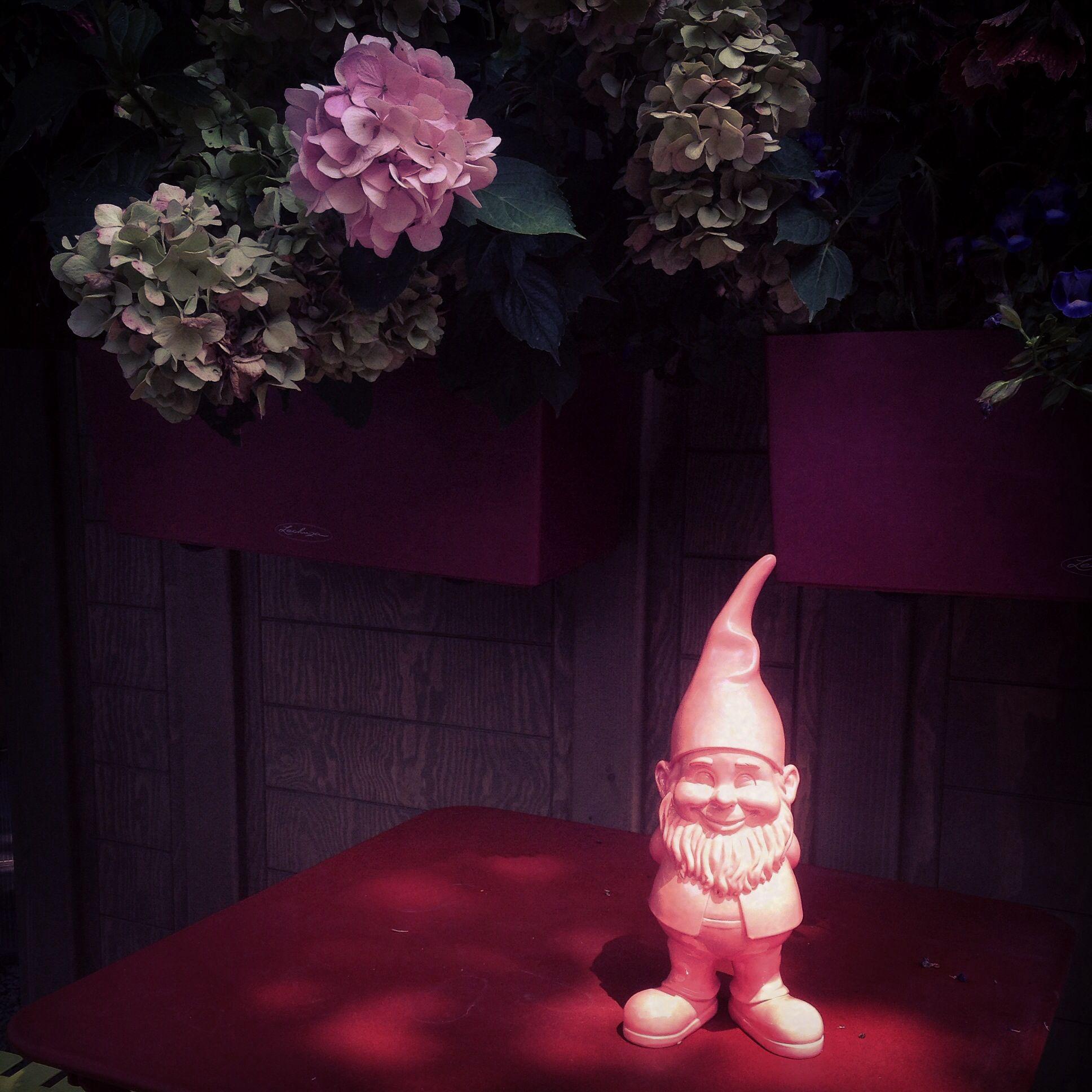 Nano rosa per giardino rosa