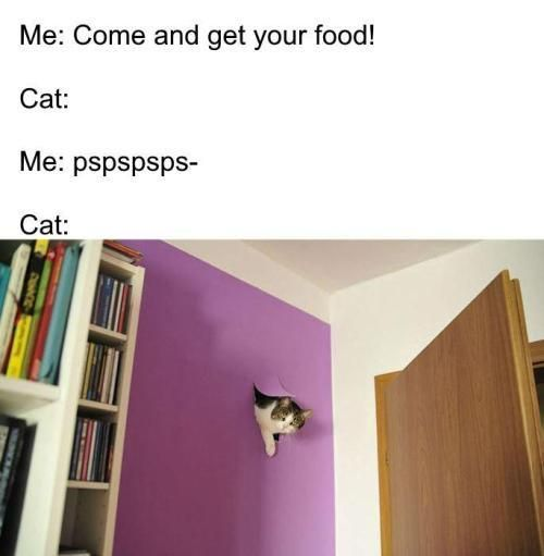meme animals