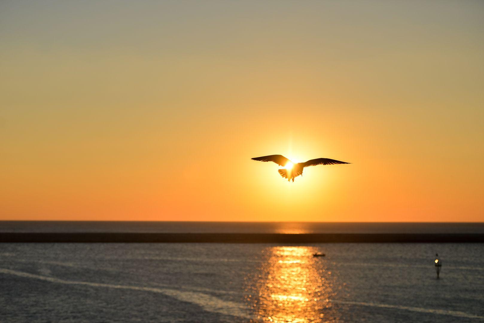 Volando Sobre El Mar En Un Atardecer Aves Volando Gaviotas