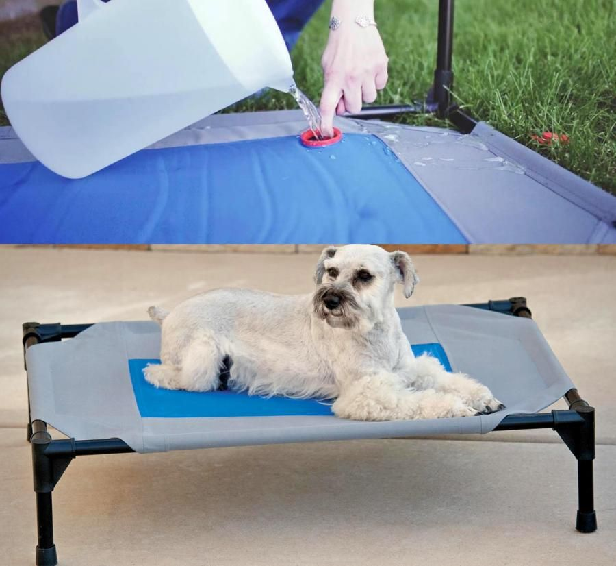 This Outdoor Dog Bed Stores Cold Water To Keep Your Pooch Cool In