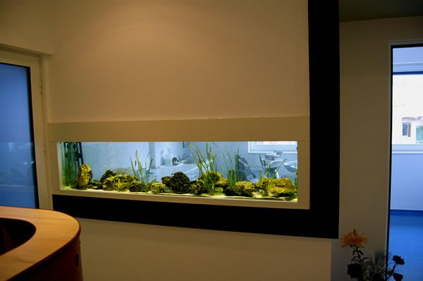 50 In Wall Aquariums u2013 Should See Pictures And Types Interior