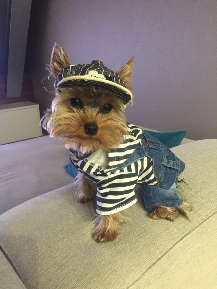 Awesome Cute & Classic Baseball Cap Summer dog, Pet