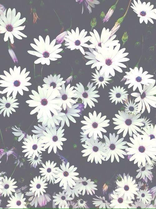 Imagen vía We Heart It #background #flowers #fresh #grunge #nature #wallpaper #white