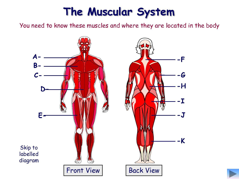 Naming Muscles Worksheet