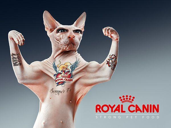 Royal Canin Semper Fi Behance Collaboration N 6 On Behance