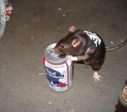 Rats, Cute Animals