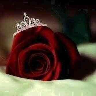 Red Rose With Crown Ring Beautiful Rose Flowers Beautiful Flowers Wallpapers Beautiful Roses