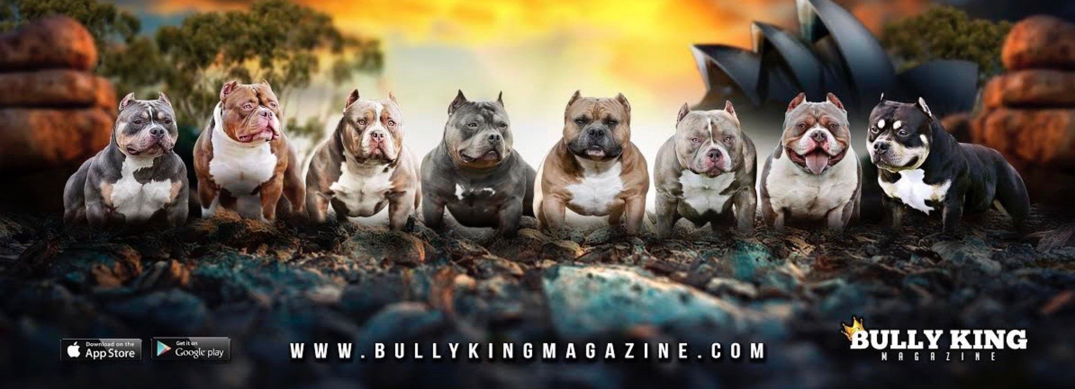 The Ultimate Dog Food Supplement Guide For Your American Bully