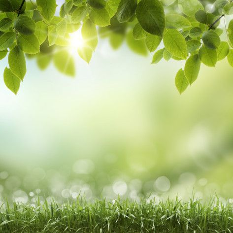 Spring Or Summer Season Abstract Nature Background With Grass And Blue Sky In The Back Posters By Krivosh In 2020 Abstract Nature Nature Backgrounds Summer Backgrounds
