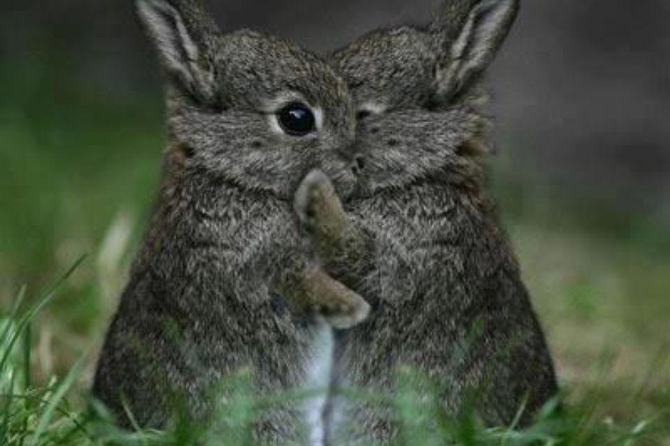 Pin by Wendi Fuller on Cuteness Animal hugs, Cute baby