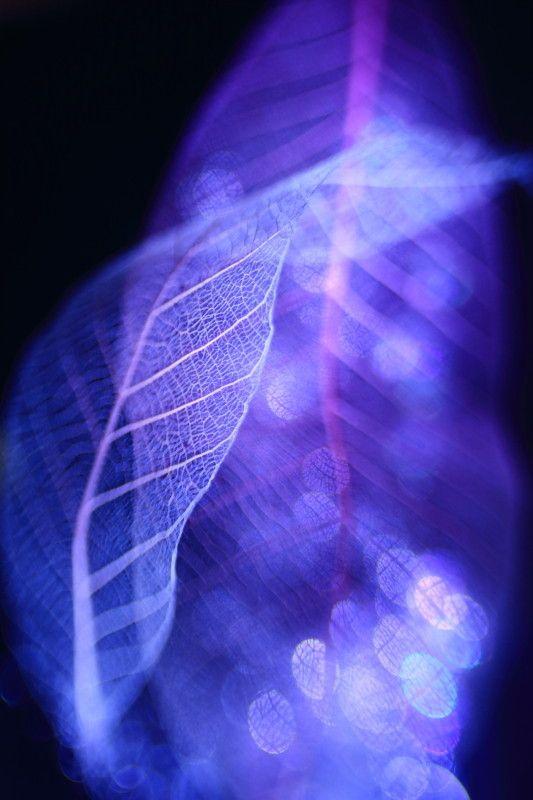 Leaf spirit by Shihya Kowatari on 500px