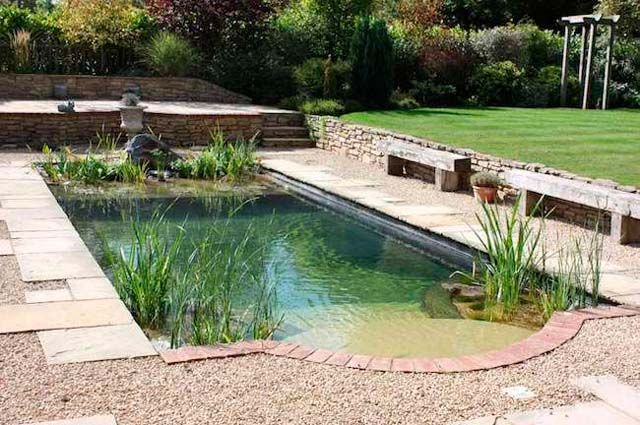 Small Organic Pools Google Search Natural Swimming Pools Pool Landscaping Backyard Pool