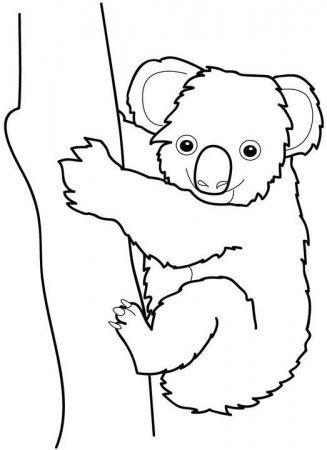 Dibujo Koala 1 Dibujos Dibujos De Animales Koala