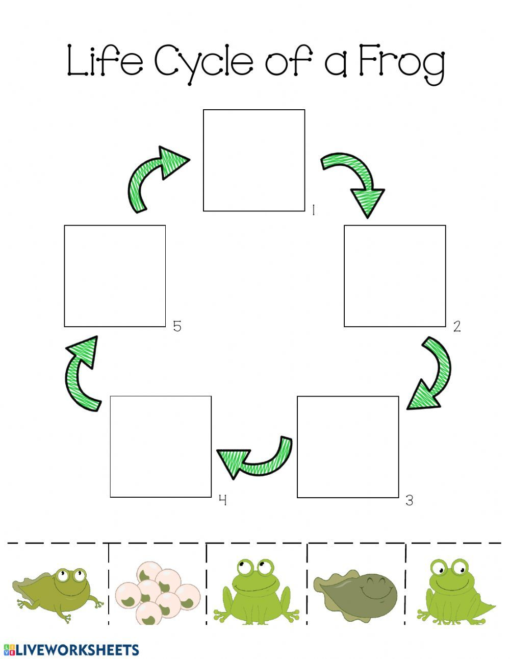 Life Cycle Of A Frog Life Cycle Worksheet Life Cycles Preschool Frog Life Cycle Activities Life Cycles [ 1291 x 1000 Pixel ]