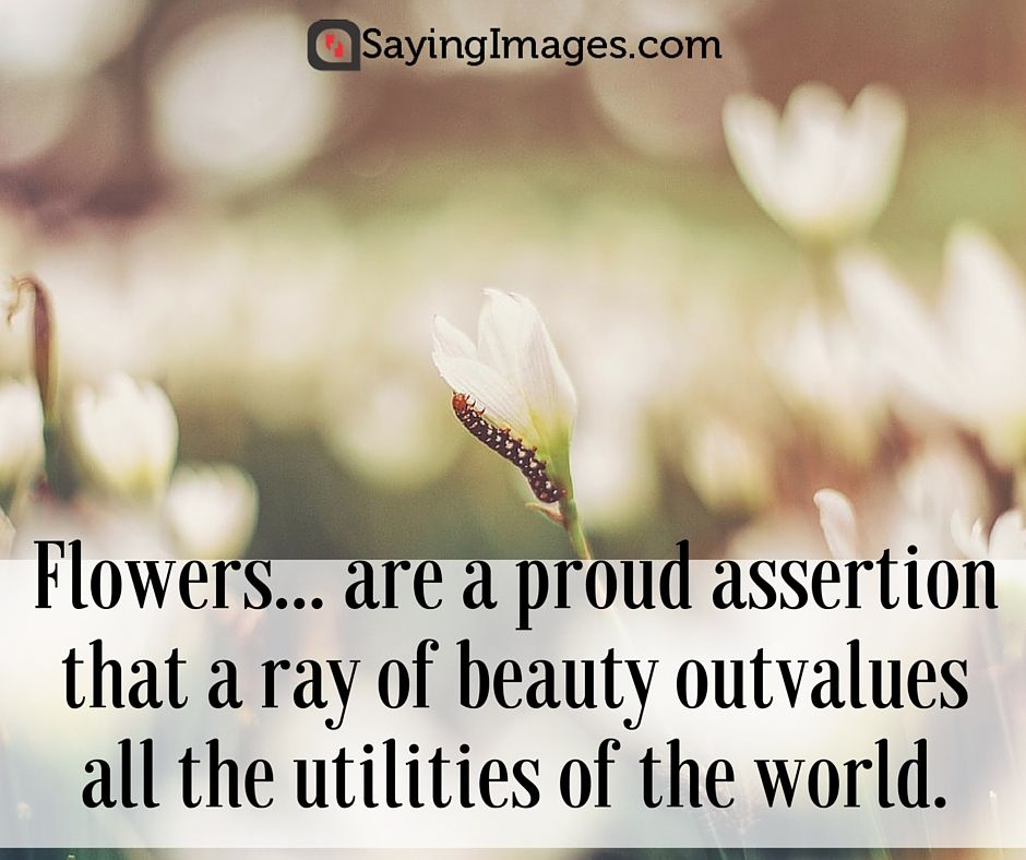 42 beautiful flower quotes beautiful flowers and flower 42 beautiful flower quotes sayingimages flower quotes mightylinksfo