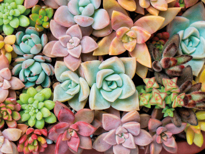 Flower Market From Thursday 0211 At Lidl Uk Succulents Cactus