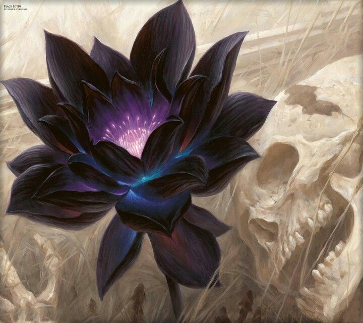 Black lotus flower