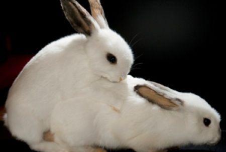 フジツボのペニスは体長の30倍 特別展 動物達のセックス事情 開催中 動物 うさぎ ウサギ