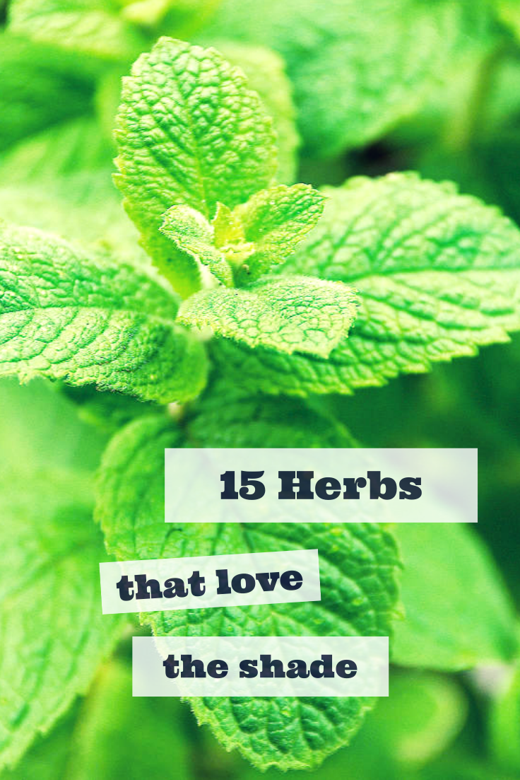 15 Herbs That Thrive In Shade Gt Http Www Hgtvgardens