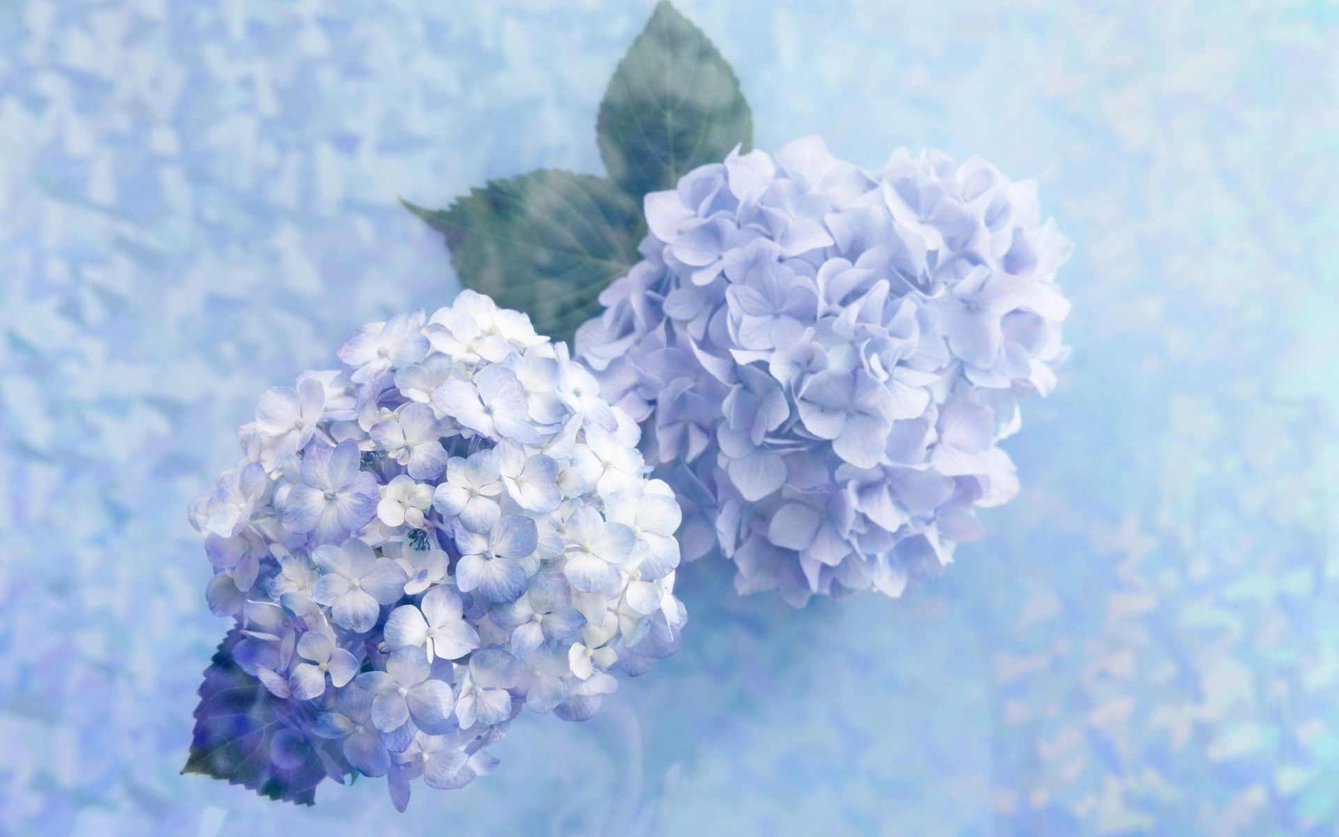 Flowers Hydrangea Wallpaper 1881241 Wallbase Cc Hydrangea Wallpaper Flower Wallpaper Artificial Hydrangea Flowers