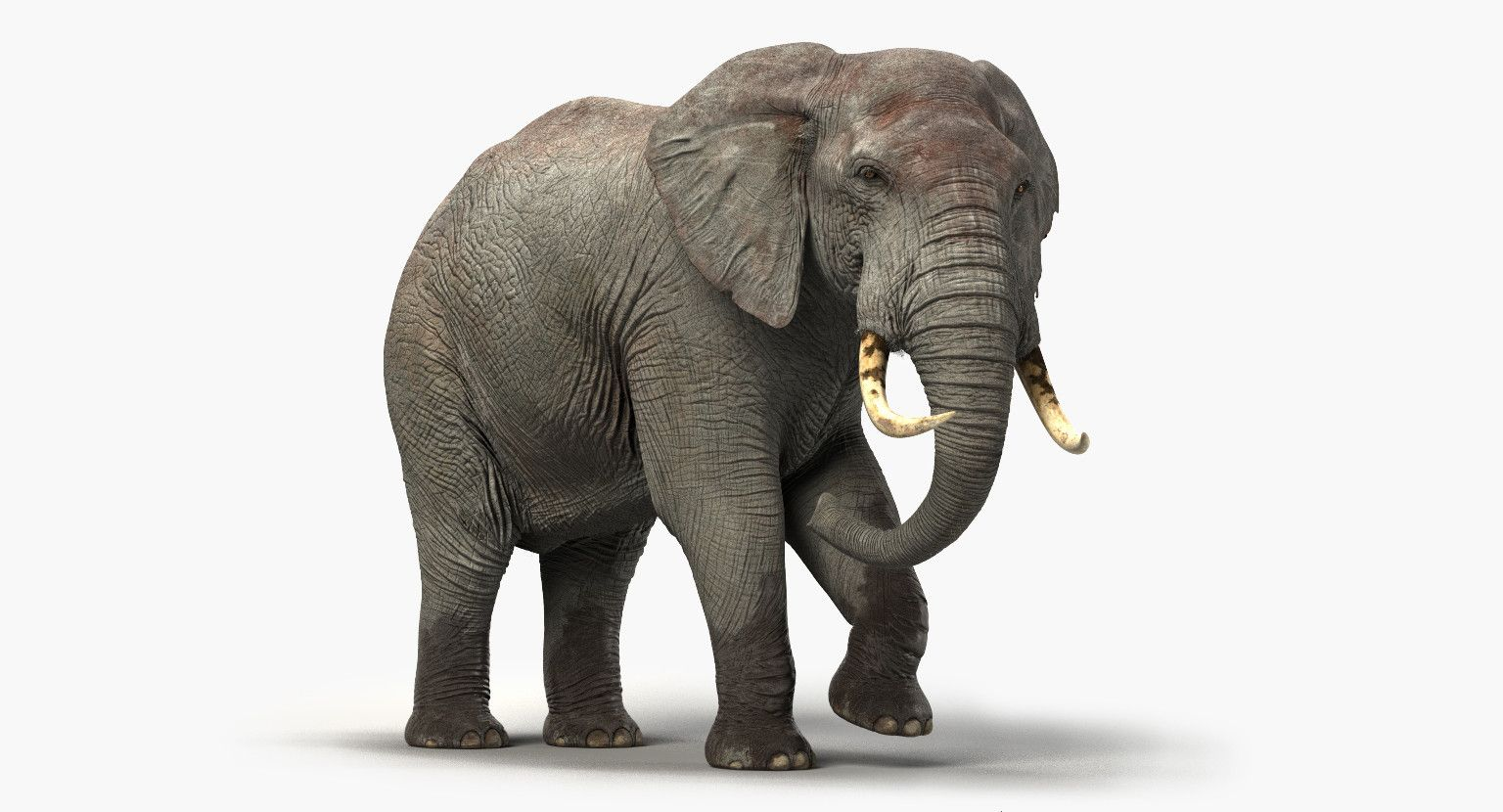 Elephant Rigged 3d Elephant 3d Model Rigs