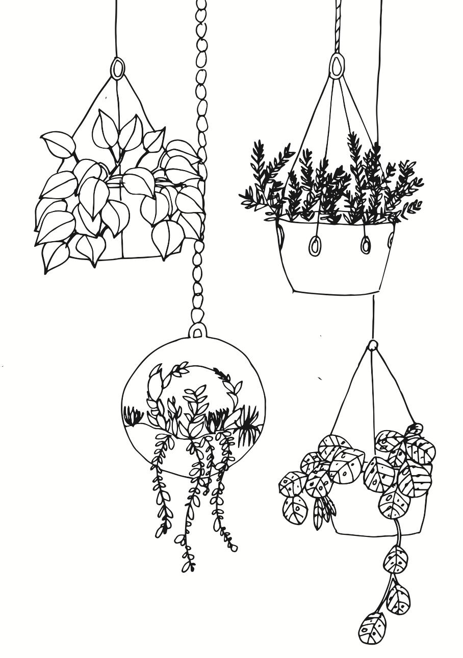 Pflanzen zeichnen für Anfänger