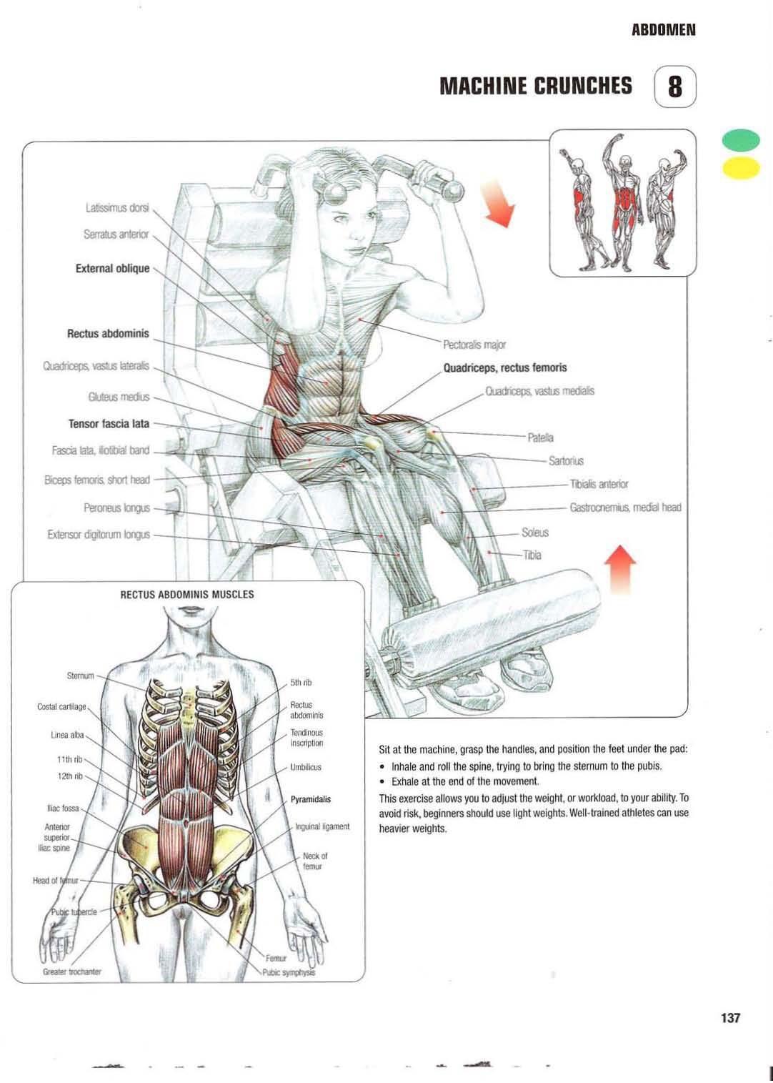 Strength Training Anatomy 8 Machine Crunches Abs Core Six Pack