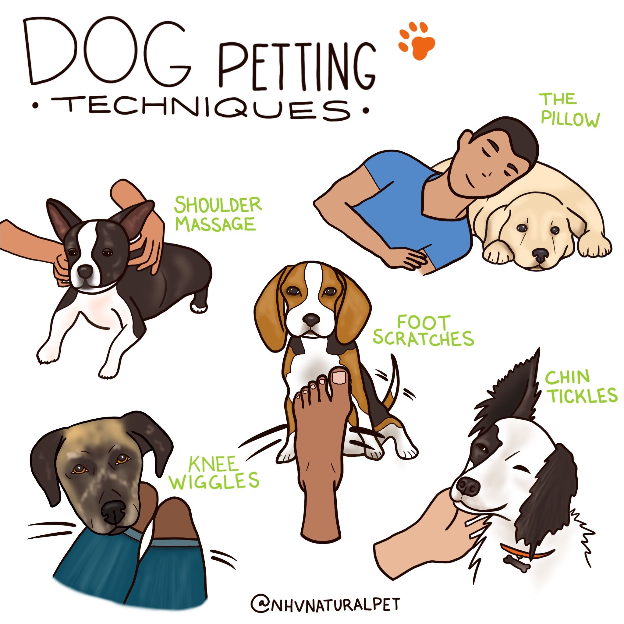 What Can You Do Today To Help Your Pet Tomorrow 5 Essential Tips In 2020 Pets Your Pet Your Dog