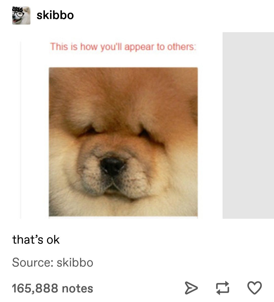 Pin By All Things Trendy On Dogs And Puppies Tumblr Funny