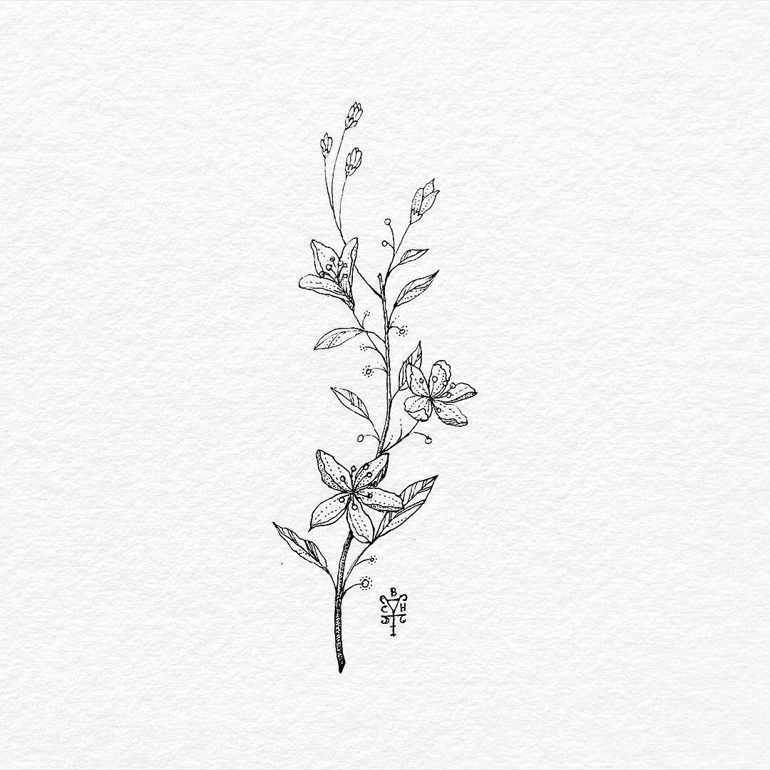 It is a picture of Simplicity Small Flower Drawing