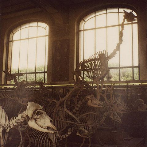 Dinosaur skeletons being packed up before a renovation at the American Natural History Museum #nyc
