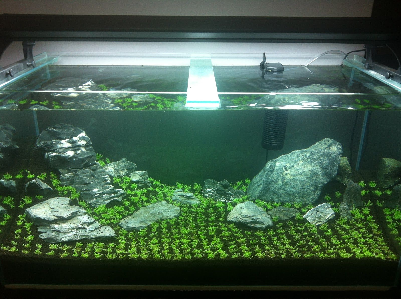 Iwagumi Aquascape   Google Search