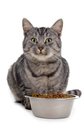 homemade dehydrated cat food