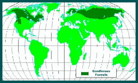 Coniferous forest map field guides pinterest teacher stuff coniferous forest map gumiabroncs Images