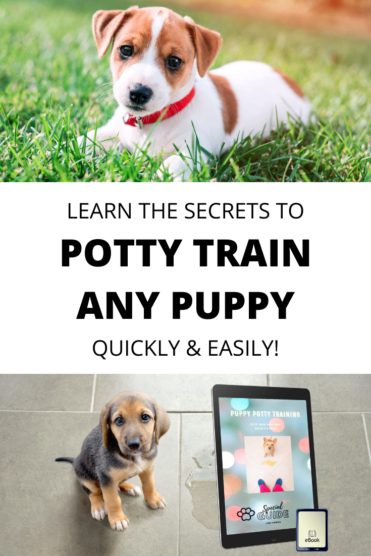 Potty Train Your Puppy Quickly Easily Potty Training Puppy Puppies Training Your Puppy