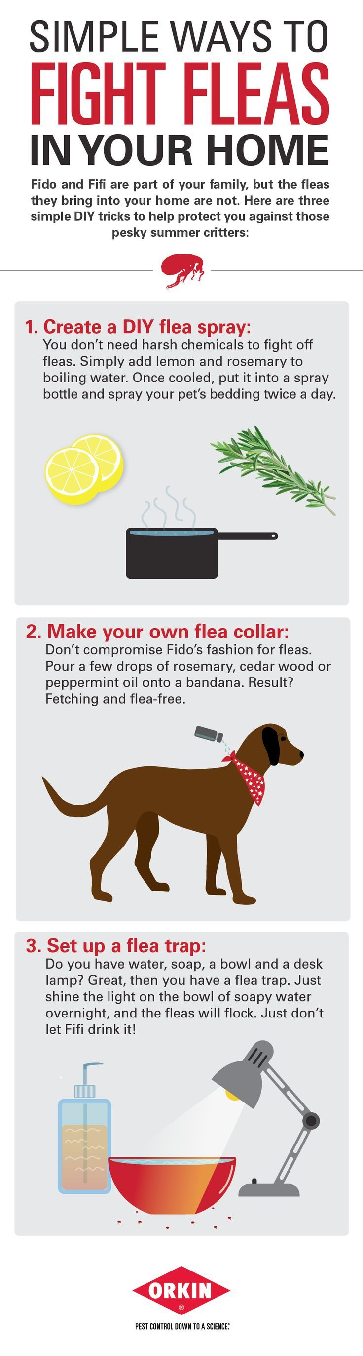 Simple Ways To Fight Flea In Your Home Fleas Dog Remedies Dog Care