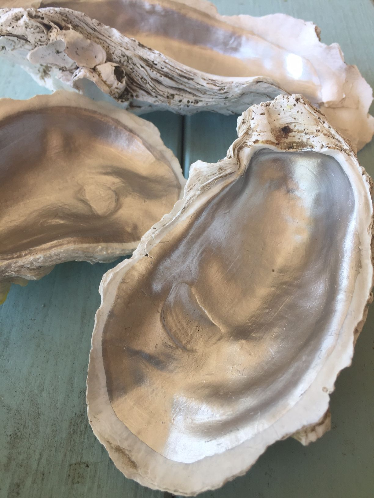 Oysters on the Half Shell Decorative Tile