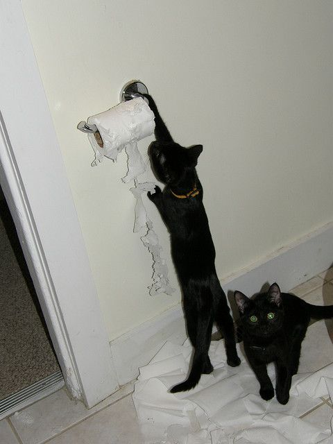 You Ll Want To Keep The New Foster Kittens In The Bathroom They Told Me Bad Idea Something Illi Does Cats Crazy Cats Bad Cats