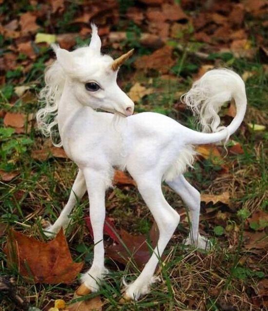 Unicornio bebé.