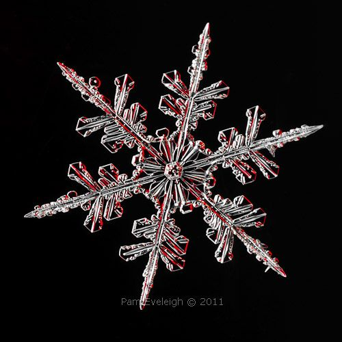 Snow Crystal - Feb 6, 2011