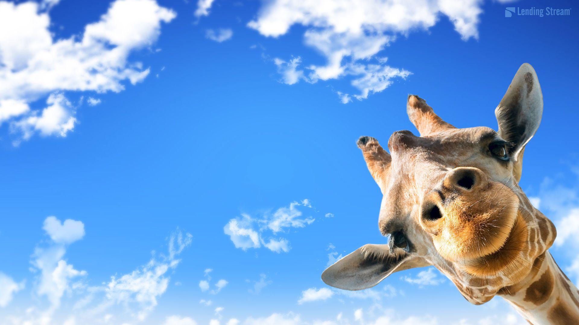 Cute Giraffe #ei1 1920x1080 px 541.75 KB Animal Cute baby ...
