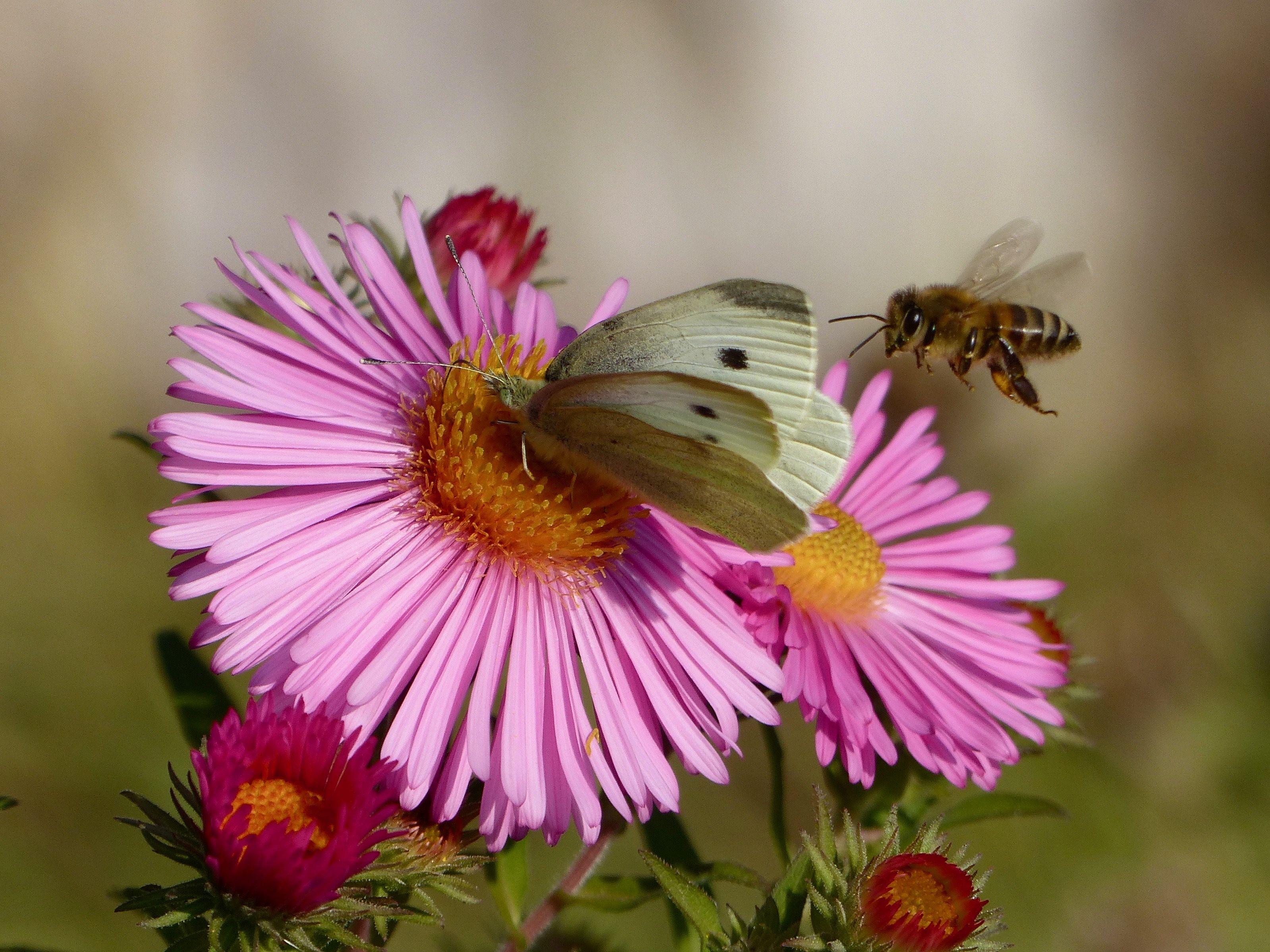 Die Spatbluher Laden Nochmal Ein Herzlich Willkommen Stauden Taglilien Insekten