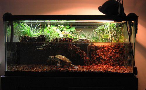 Pet turtles setup cages food habitat pets for Turtle fish tank