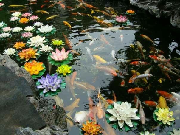 Esos bonitos jardines en Shanghai #carpas #estanque #flordeloto