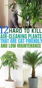 12 Indoor Plants that Clean the Air and are Safe for Cats,  #air #Cats #clean #gardenlandscapinghowtogrow #Indoor #Plants #safe
