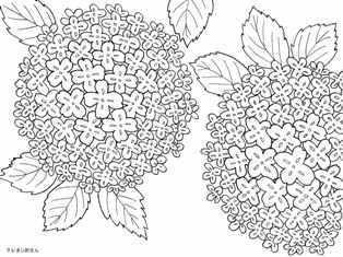 アジサイの花柄の浴衣の塗り絵の下絵画像 Coloring Pages Coloring