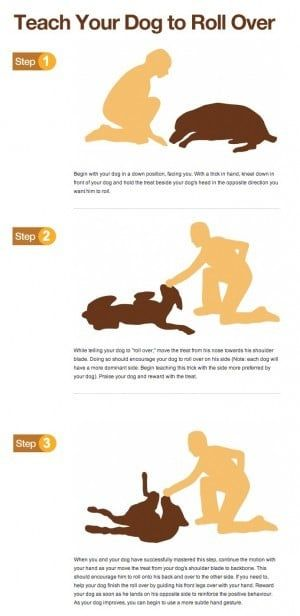 Teach Your Dog To Roll Over Infographic Dog Training Dog